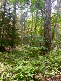Lot 6 -- 345 East Point Road